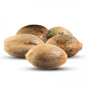 5 Free Seeds