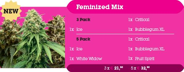 Feminized Mix Pack
