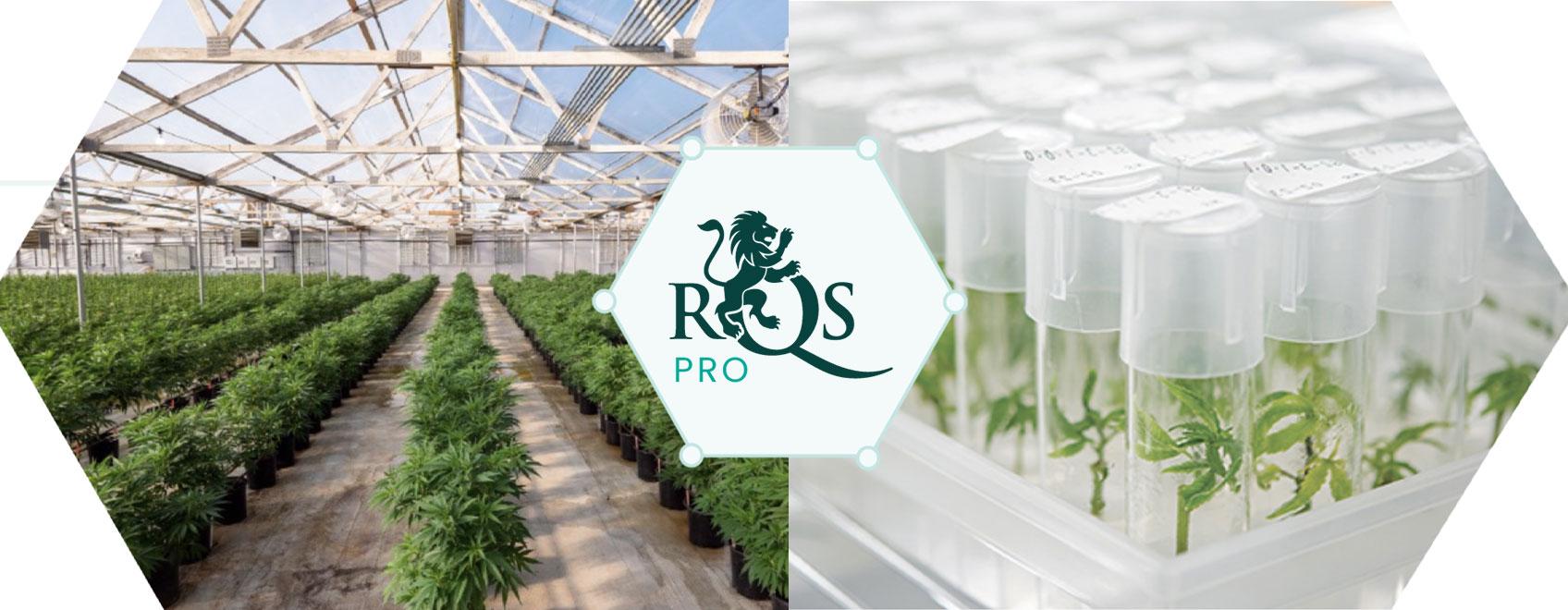 RQS Pro: innovatie- en ontwikkelingsleider in de cannabissector