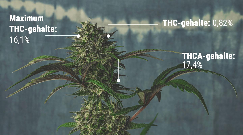 Inzicht in de wetenschap achter het testen van THC