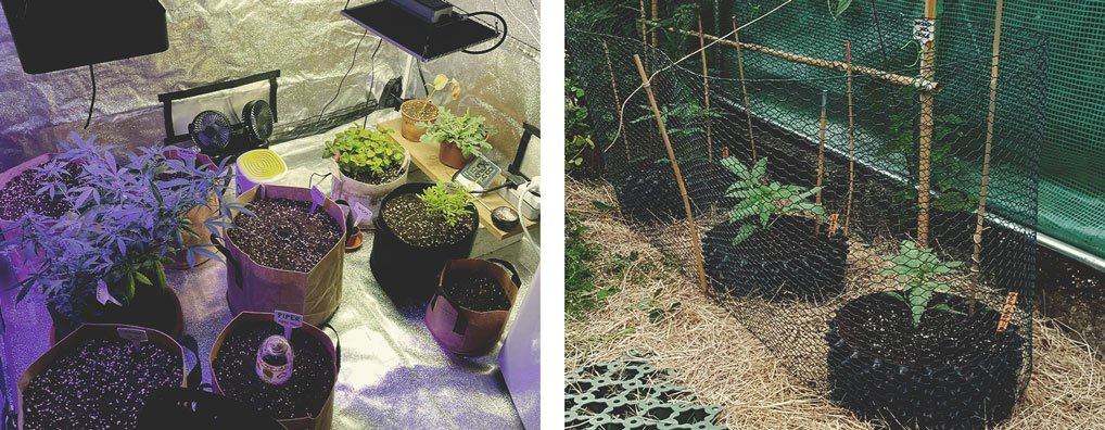 HOW TO ACHIEVE IDEAL VEGETATIVE GROWTH