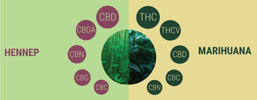 Hennep vs marihuana