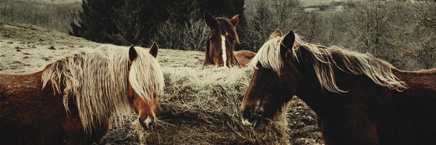 Paarden biologische compost