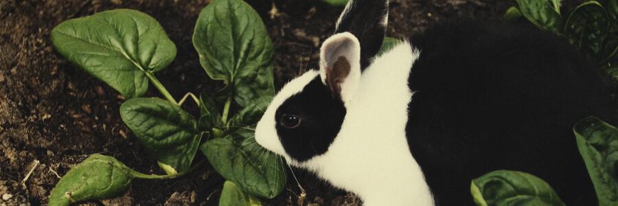 Organische compost van konijnen